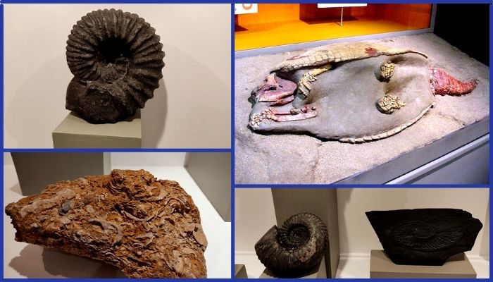 museo geologia