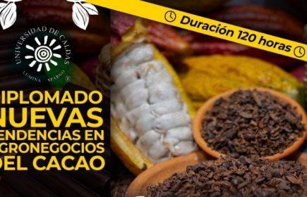 diplomado cacao
