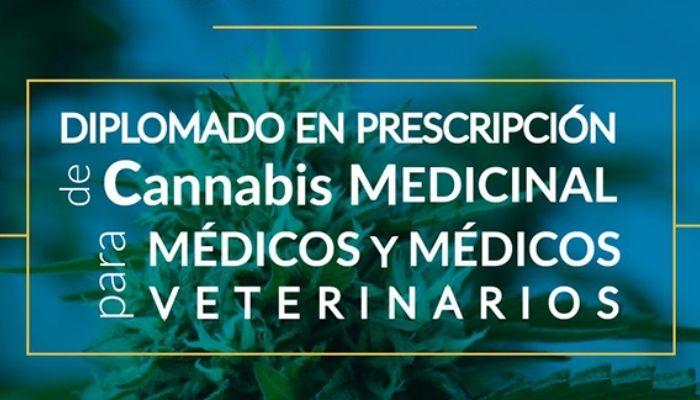 diplomado cannabis